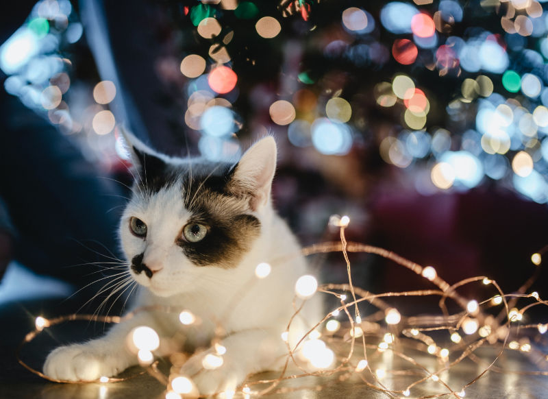 Robuste Lichterketten und Baumschmuck für deinen Weihnachtsmarkt Zuhause