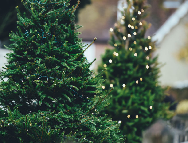 Tannenbäume für deinen Weihnachtsmarkt Zuhause